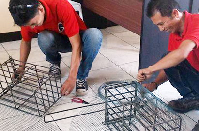 Rat Control in General Santos (Gensan)